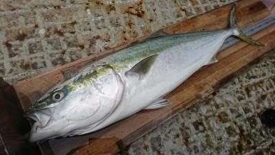 <p>山出様 沖の北 のませ釣り(エレベーター仕掛け) ブリ85㎝! 7時に魚をお預かりしました。幸先の良いスタート!今日は何本釣れるかな♪</p>