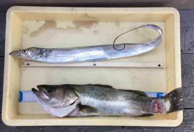 <p>小野様 沖の北 のませ釣り・ハネ60cm タチウオゲッター・タチウオ</p> <p>いいサイズのハネがのませで釣れましたよ♪ 釣果情報提供にご協力頂き、ありがとうございます。</p>