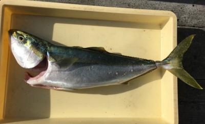 <p>匿名のK様 沖の北 のませ釣り メジロ67.0cm</p> <p>本日1本目の青物です。8時前にHitされてますよ♪ いつも釣果情報提供にご協力頂き、ありがとうございます。</p>