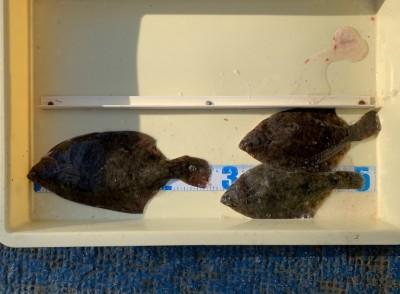 <p>渡部様 沖の北 投げ釣り/青イソメ カレイ27.0cmまでを3枚</p> <p>今日もカレイが順調に釣れていますよ。カレイ釣果でスタンプ1個進呈です♪</p>