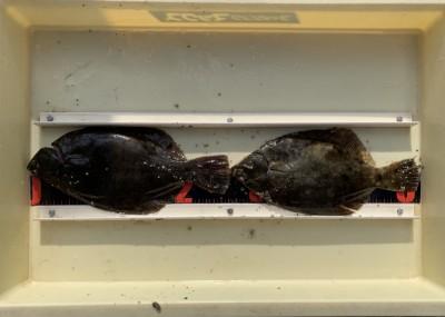<p>フィッシングマックスなんば店 上羽様 沖の北 投げ釣り/青イソメ・マムシ カレイ26.5cmまでを2枚</p> <p>初めて岸一をご利用いただき、見事にカレイGetです。またのご来場をお待ちしてますよ♪</p>