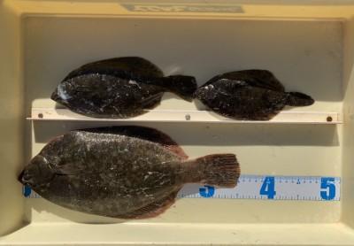 <p>小野様 沖の北 投げ釣り/青イソメ カレイ35.5cmまでを3枚</p> <p>グッドサイズのカレイが上がりましたよ。お見事です! カレイ釣果でスタンプ1個進呈です♪</p> <p>&nbsp;</p>