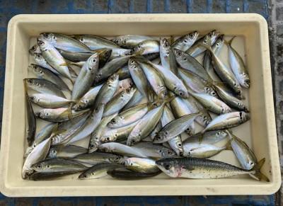 <p>せっちゃんマン様 沖の南 サビキ釣り 小アジ大漁・中サバ</p> <p>本命の狙いは青物でしたが・・・。餌を大漁確保されましたね。釣果写真へのご協力、ありがとうございます。</p>