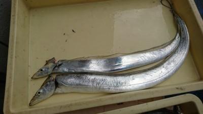 <p>山根様 沖の北 ドジョウの引き釣りでタチウオ!タチウオ釣果でスタンプ1個進呈です。</p>