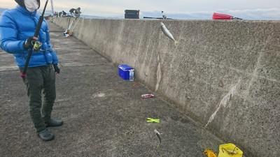 <p>沖の北(7時半便)内向き サビキ釣りで小アジが釣れていました!中アジも少し混ざっていましたよ。</p>
