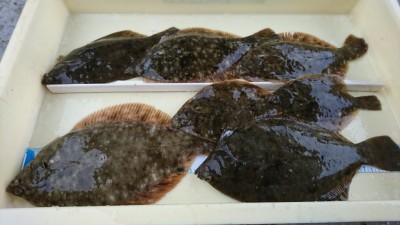 <p>匿名様 沖の北 カレイ7匹!今日も朝からいい感じですね♪カレイ釣果でスタンプ1個進呈です。</p>