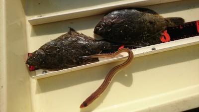 <p>田村様 沖の北 投げ釣りでカレイ!6時半~7時半くらいに時合いがあるようです。</p>