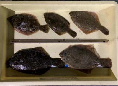 <p>大給様 沖の北 投げ釣り/青イソメ カレイ30cmまでを5枚</p> <p>前回のご来場時より釣果枚数増えましたね♪ カレイ釣果でスタンプ1個進呈です。</p>