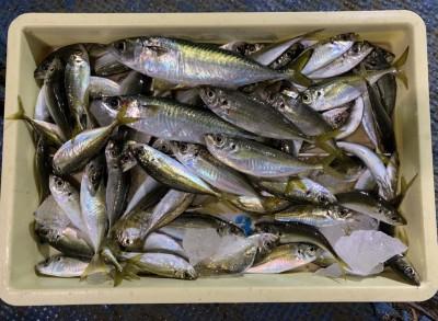 <p>磯田様 沖の北 飛ばしサビキ 中~小アジ多数・中サバ</p> <p>中層でサバ、底付近ではアジが狙えますよ。大漁です♪ いつも釣果情報提供にご協力頂き、ありがとうございます。</p>