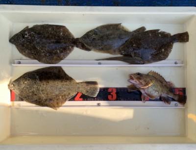 <p>村田様 沖の北 投げ釣り カレイ26cmまでを4枚・ガシラ・ハゼ</p> <p>カレイ狙い初挑戦で釣られましたよ。おめでとうございます。カレイ釣果でスタンプ1個進呈です♪</p>