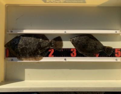 <p>山口様 沖の北 投げ釣り/青イソメ カレイ25.5cmまでを2枚</p> <p>初釣りでカレイGetです。カレイ釣果でスタンプ1個進呈です♪</p>