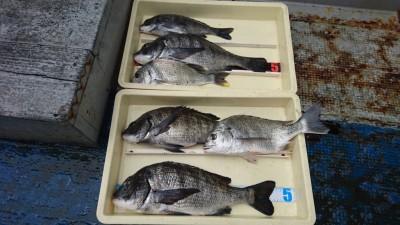 <p>濱本様 中波止 フカセ釣り チヌ~47.5cmまで多数GET</p> <p>フカセチヌの面白い季節になりましたね(^^♪おめでとうございます!</p>