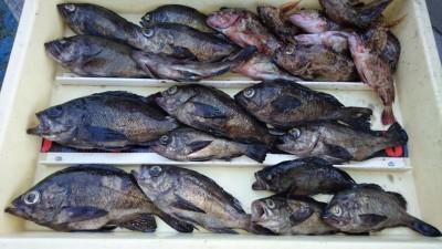 <p>大谷名人 沖の北 エビ撒き メバル~24cmまで多数/ガシラ多数</p> <p>今日は少し浮いてたとの事でした(^^♪名人曰く魚はおる!と言っていましたよ。おめでとうございます!</p>