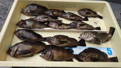 <p>大谷名人 沖の北 エビ撒き メバル大漁GET</p> <p>コツは探り歩く事だそうです(^^♪おめでとうございます!</p>