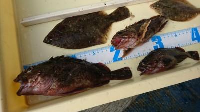 <p>匿名様 沖の北 カレイと良型ガシラ!カレイ釣果でスタンプ1個進呈です♪</p>
