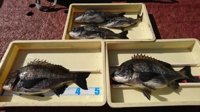 <p>戸田様 沖の北 フカセ釣りで48㎝までのチヌ5枚!7時ごろから1時間おきくらいで釣れたそうです。棚は底付近。どの魚もよく肥えてパンパンでした。チヌ釣果でスタンプ1個進呈です♪</p>