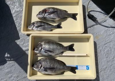 <p>濱本様 沖の北 フカセ釣り/オキアミ チヌ42.0cmまでを4枚</p> <p>リアル釣果情報に登場された濱本様。良型混じりで結果4枚とお見事な釣果です。いつも釣果情報提供にご協力頂き、ありがとうございます。チヌ釣果お持込みでスタンプ1個進呈です♪</p>