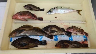 <p>川原様 沖の北 エビ撒き釣りでアイナメ・ガシラ・メバル・サバ!根魚いい感じですね♪サバも専門的に狙えばもっと釣れるかも。</p>