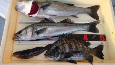 <p>熊取の田中様 沖の南 エビ撒き チヌ/ハネ/アイナメGET</p> <p>今日は大漁ですね(^^♪スタンプもGETです!おめでとうございます</p>