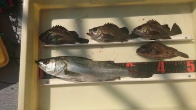 <p>水島様 沖の北 エビ撒き メバル/ハネGET</p> <p>根魚狙いも面白くなってきそうですね(^^♪おめでとうございます!</p>