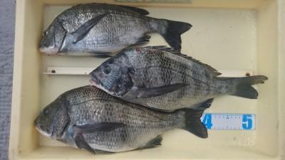 <p>濱本様 沖の北 フカセ釣り 良型チヌ3尾GET</p> <p>いつもながら素晴らしい釣果!お見事です(^^♪</p>