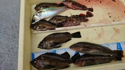 <p>川原様 沖の北 エビ撒き釣りで根魚三種!メバルは良型でした♪潮もよくなってきたかな。</p>