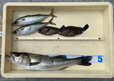 <p>水島様 沖の北 エビ撒き釣り ハネ46.0cm・メバル2匹・中サバ2匹</p> <p>シラサエビでは様々な魚種が狙えますね♪ いつも釣果情報提供にご協力頂き、ありがとうございます。ハネ釣果お持込みでスタンプ進呈です。</p>