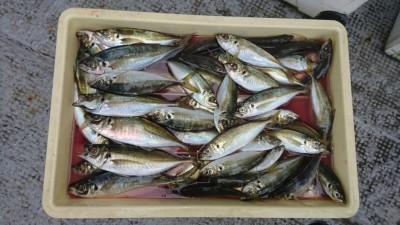 <p>白田様 沖の北 サビキ 中アジ/アジGET</p> <p>平成最後の釣りは中アジでしたね(^_^;)おめでとうございます</p>