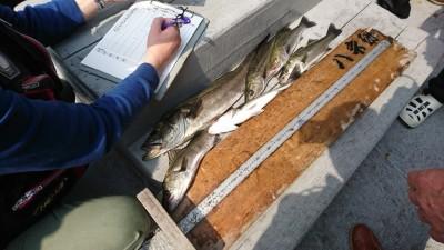 <p>今日はハネ研様の例会でした!今週はハネは釣れるものの大きいサイズが釣れていなかったんですが、さすがハネ研の皆様いいサイズも釣れていましたし、数もあがっていました。今日のトップ賞は右手様の68.7㎝でした。沖の北、沖の南、旧赤、旧白に別れての釣りでしたがどこもよく釣れていましたよ。全体で15匹以上の釣果でした。</p>