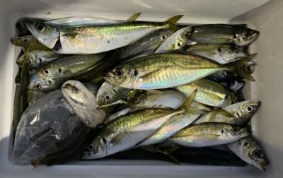 <p>田中様 沖の北 サビキ釣り 中アジ・中サバ大漁</p> <p>夕方の時合で大漁釣果です! 体高のあるいいサイズのアジも混じりますので、釣り応えがありますね♪</p>