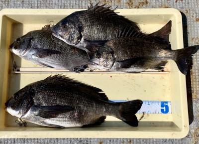 <p>植田様 旧一文字 落とし込み/パイプ チヌ43.2cmまでを4枚</p> <p>今日は水面に泡汚れが浮いており、釣り辛い状況でしたが、きっちり釣果を出されていますよ。</p>