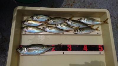 <p>高倉様 沖の北 サビキ 中アジ/アジGET</p> <p>今日も渋いようですが、粘れば良型が釣れる可能性ありですね!おめでとうございます</p>