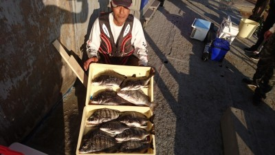 <p>小松様 沖の北 紀州釣り チヌ~43.5cmまで11尾GET</p> <p>今日は紀州釣りをされていましたが、またもや爆釣ですね!おめでとうございます</p>