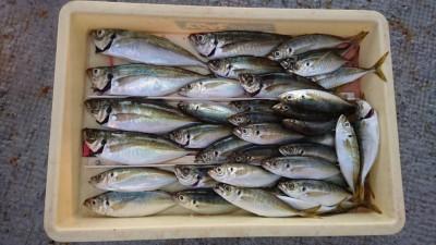 <p>田所様 沖の北 サビキ 中アジ/アジGET</p> <p>15:00~18:00までの釣果です!おめでとうございます</p>