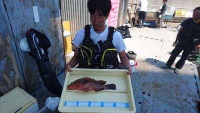 <p>弥永田様 沖の北 カゴ釣り アコウ42.5cmGET</p> <p>ついに良型アコウでましたね!!アコウファンの皆様お待ちしております(^O^)</p>