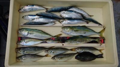 <p>立野様 沖の北 サビキ アジ/イワシ/ツバスGET</p> <p>ツバスは豆アジのノマセで釣ったそうです!おめでとうございます</p>