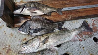 <p>岩田様 沖の北 エビ撒き釣り ハネ63.2㎝ チヌ44.6㎝ 5月もハネチヌダービー開催中!4月の1匹長寸の記録はリセットされて新たにスタートです。初日からハネ60㎝オーバーで幸先がいいですね。</p>