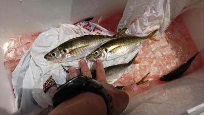 <p>匿名様 沖の北 サビキ釣りで中アジ!釣れてるんですが今朝はちょっと時合が短かったようですね。</p>
