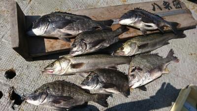 <p>福山様 沖の北 エビ撒き釣り ハネ59㎝とチヌ49㎝!いつもの大漁釣果♪さすがです。</p>
