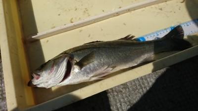 <p>岩田様 沖の北 エビ撒き釣りでハネ43㎝!先端よりの内向きです。去年はあのあたりでデカイのが釣れたんですが今年はまだ姿を現さず。</p>