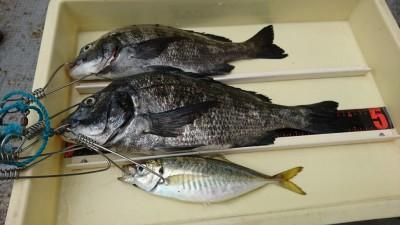 <p>前田(尚)様 沖の北 エビ撒き釣りでチヌ44㎝と中アジ!シラサで釣れるアジは良型が多いような気がします。大きくなると食の好みもかわるんですかね。</p>