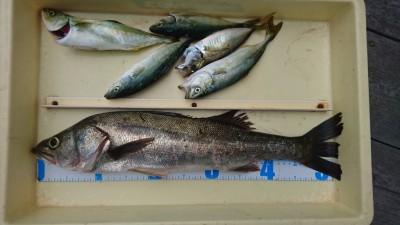 <p>サカゲン様 沖の北 エビ撒き ハネ56cm/ツバスGET</p> <p>最近ハネチヌの釣果が悪いですねーこれからに期待です(^o^)vおめでとうございます</p>