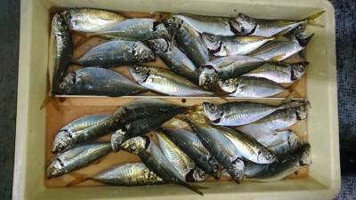 <p>津田様 沖の北 サビキ アジGET</p> <p>サビキで良く釣れてますね!おめでとうございます</p>