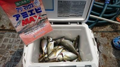 <p>マックススタッフ緒方さん 沖の北 サビキで中アジ!先端付近で9時を過ぎてもずっと釣れたそうです。</p>