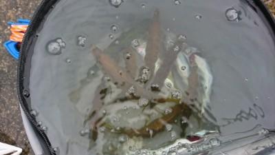 <p>沖の北リアルタイム(6:10) 6時頃まで中アジの時合いがあったそうです。その後はぽつぽつと。ツバスも釣れていましたよ。</p>