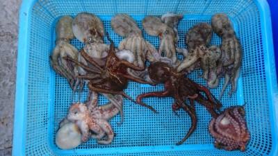<p>米倉様 沖の北 タコジグ タコ多数GET</p> <p>沖の北で好釣果ですね!サイズは旧一文字がよさそうです(^O^)おめでとうございます</p>