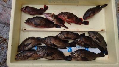 <p>川原様 沖の北 エビ撒き メバル/ガシラGET</p> <p>良型良く釣れてますね(^O^)おめでとうございます</p>