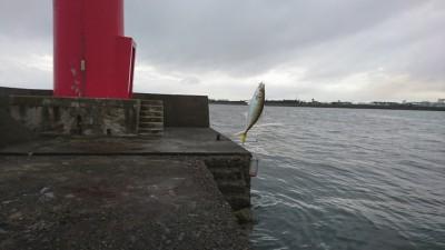 <p>旧一文字赤灯リアルタイム(6:00) 水潮で濁りが広がっているんですが中アジに影響はないようです。入れ食いってわけではないんですが2~3投に1匹ペースで釣れてました。旧は小サバや豆アジがいない分釣りやすいです。</p>