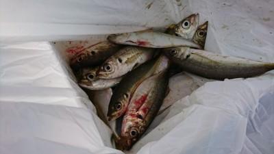 <p>沖の北リアルタイム(6:00) 6時までサビキで中アジが釣れていました。豆アジと小サバが多いようです。沖向きでツバスが沢山回遊していました。</p>