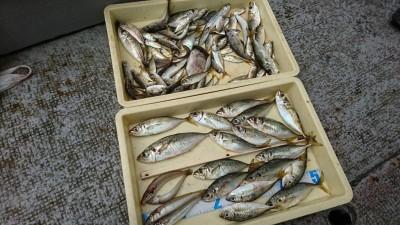 <p>沖の北 サビキで中アジ大漁!ほかに豆アジと投げ釣りでキスも! 始めは内向きでやっていたそうですが、豆アジが多すぎて6時に外向きにチェンジ。8時くらいまで中アジが釣れたそうです。サビキもいろいろ探ってみないといけませんね♪</p>